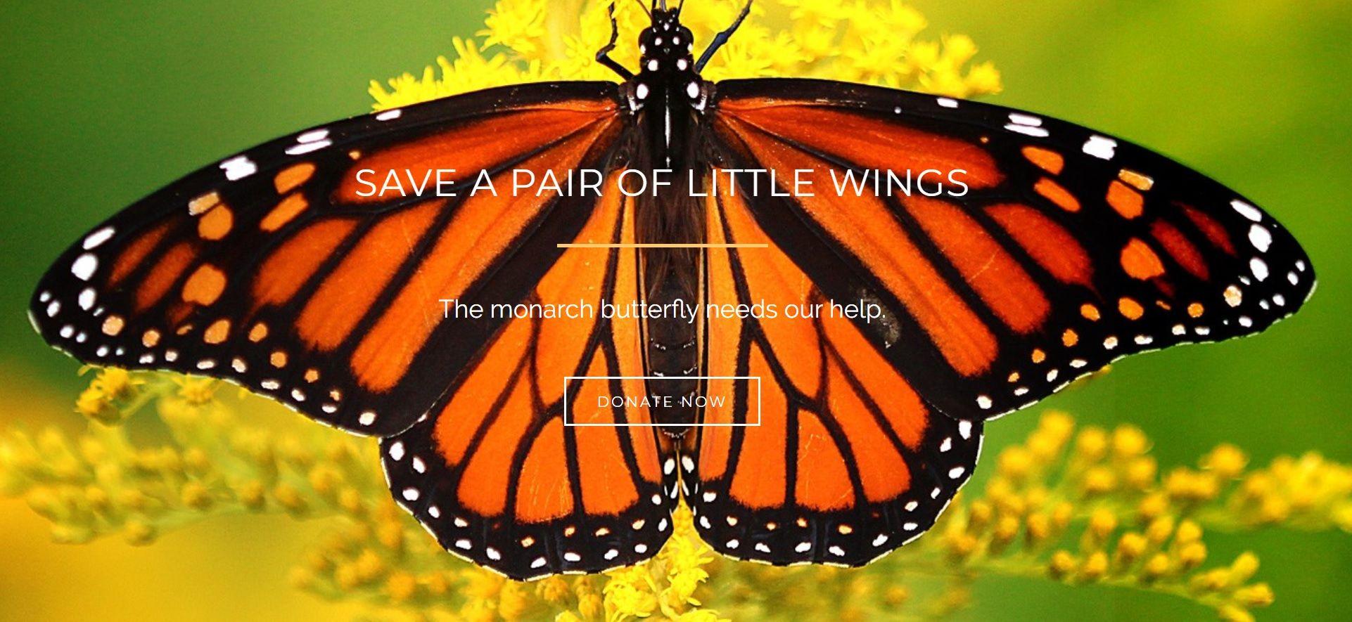 Little-Wings-Gallery-1
